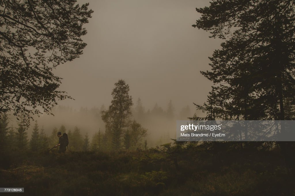 Side View Of Man In Forest : Photo