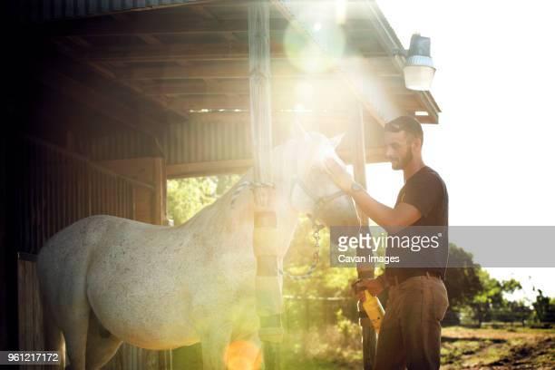 side view of man stroking horse in stable - livestock imagens e fotografias de stock