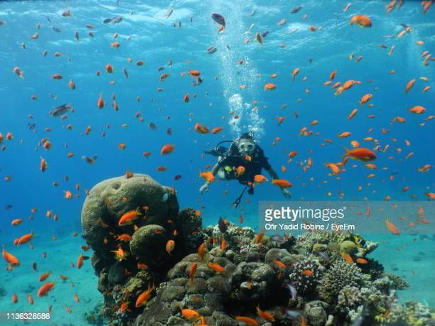 side view of mid adult man swimming in sea - eilat stock pictures, royalty-free photos & images