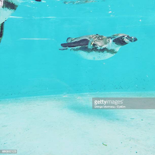 Side View Of Penguin In Water