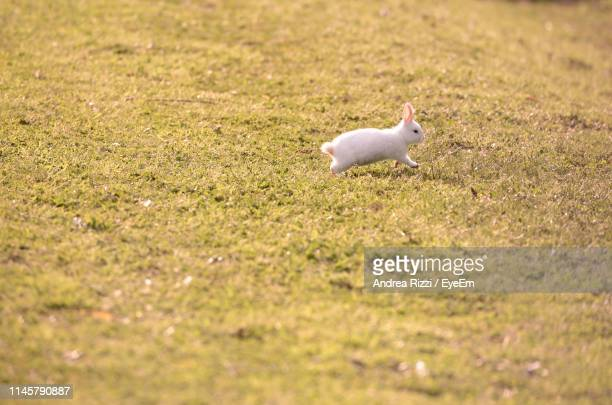 side view of rabbit running on land - andrea rizzi fotografías e imágenes de stock
