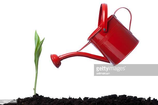 Vista lateral do regador vermelho Inclinar-se na planta verde