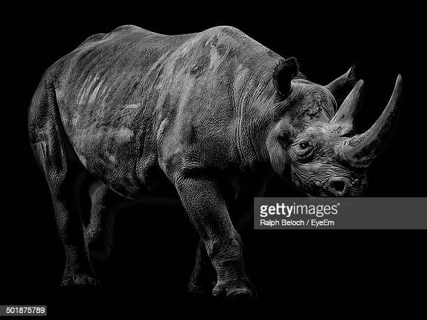 Side view of rhinoceros over black background