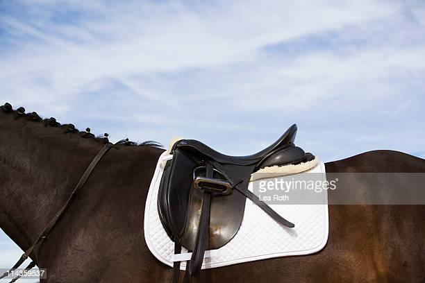 side view of saddled horse