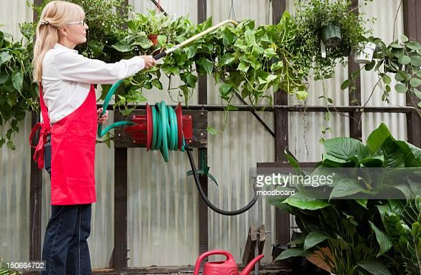Side view of senior female gardener spraying pesticide on plants in garden center