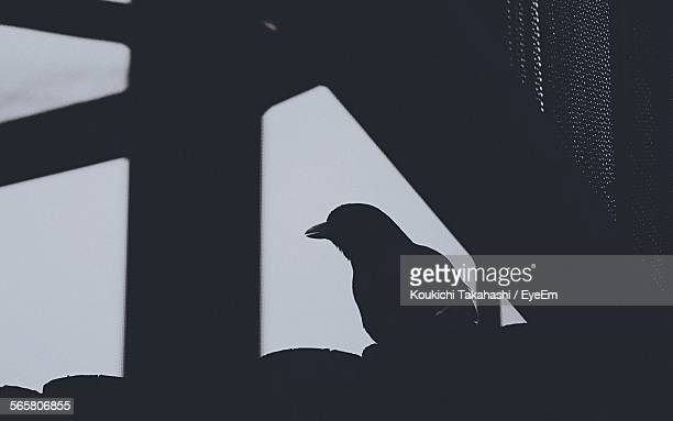 side view of silhouette bird against clear sky - koukichi ストックフォトと画像