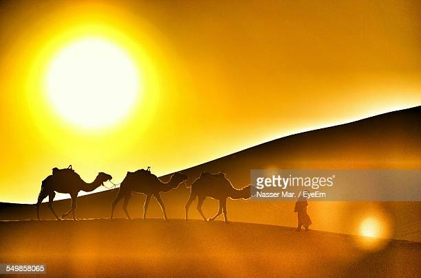 Side View Of Silhouette Camels In Desert At Sunset