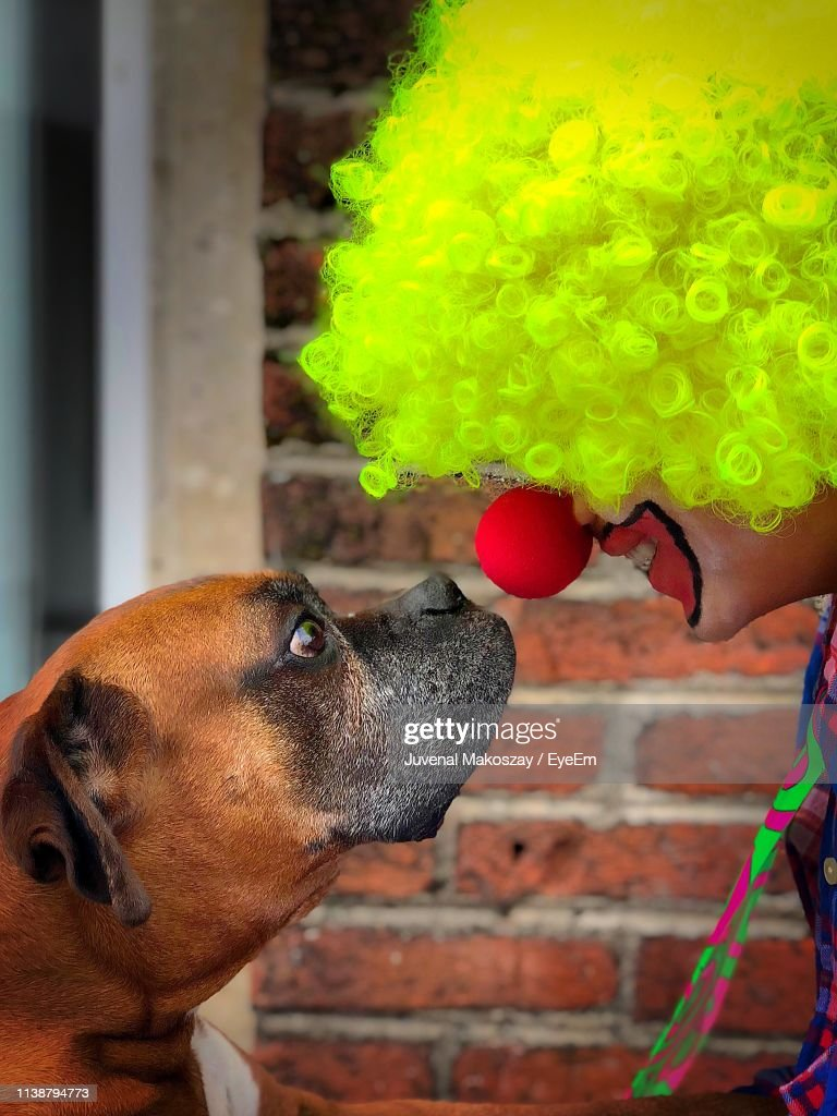 Side View Of Smiling Clown Looking At Dog During Halloween : Stock Photo