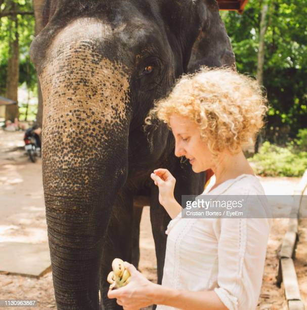 Side View Of Smiling Woman Feeding Bananas To Elephant