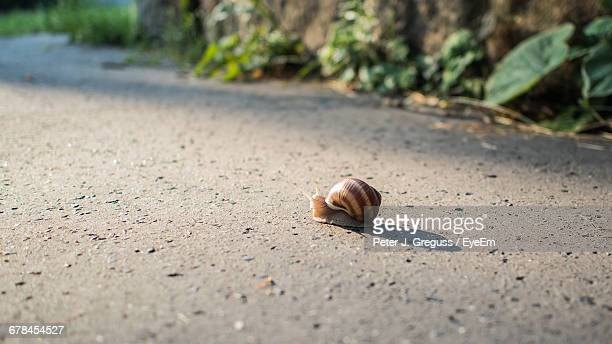 Side View Of Snail On Ground