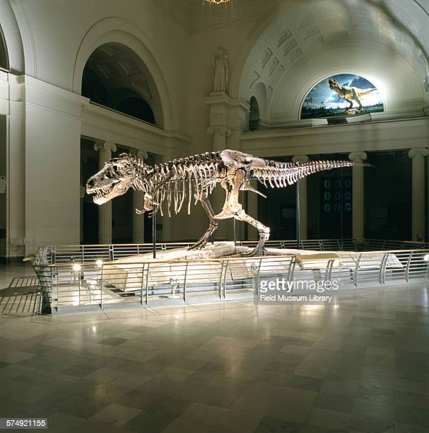 Side view of the completed exhibit installation of the fossil skeleton of Sue, a Tyrannosaurus Rex, seen in a darkened Stanley Field Hall at the...