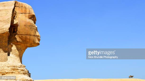 side view of the sphinx, giza, egypt - the sphinx stock pictures, royalty-free photos & images
