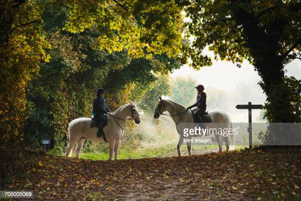 side view of two riders on grey horses on a forest path. - oxfordshire stock pictures, royalty-free photos & images