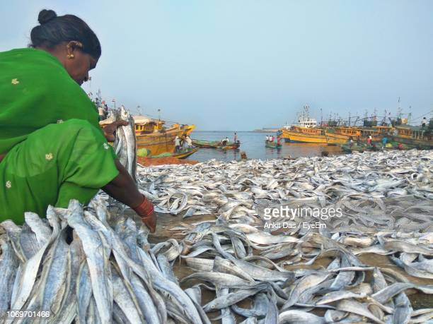 side view of woman drying fish at harbor against sky - アンドラプラデシュ州 ストックフォトと画像