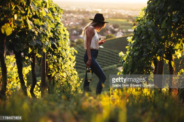 side view of woman holding wineglass in vineyard - baden württemberg stock pictures, royalty-free photos & images