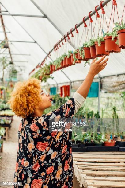 side view of woman reaching for potted plants hanging on rod in nursery - kroeshaar stockfoto's en -beelden