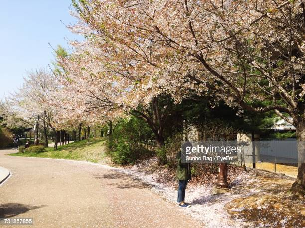 side view of woman standing on road by cherry blossom trees - bucheon stock pictures, royalty-free photos & images