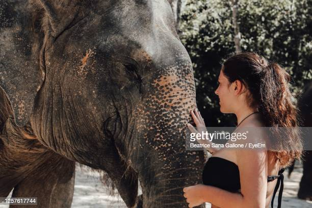 side view of woman touching elephant in forest - beatrice stock pictures, royalty-free photos & images