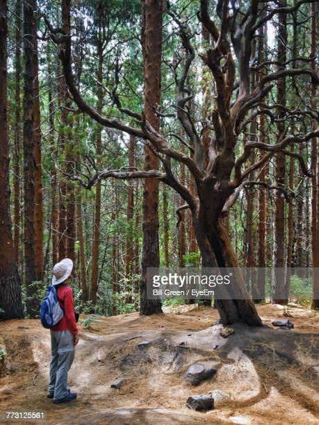 Side View Of Woman With Backpack Standing In Forest