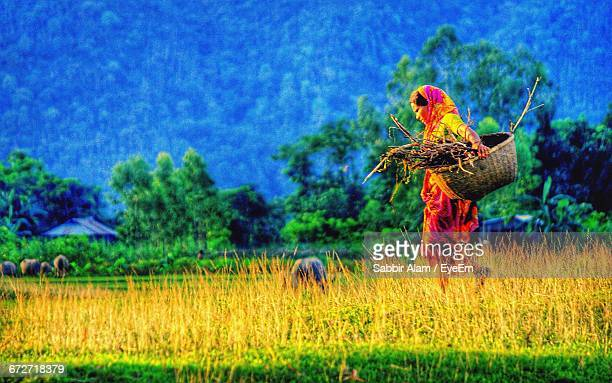 Side View Of Woman With Firewood In Wicker Basket Walking On Farm
