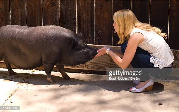 Side View Of Young Woman Crouching While Touching Pig