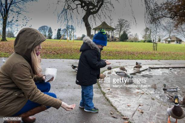 side view of young woman with son feeding ducks by pond in park - duck bird stock pictures, royalty-free photos & images