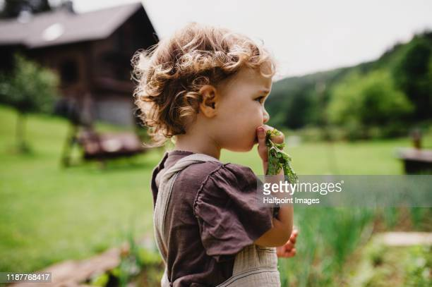 a side view portrait of cute small child outdoors gardening. - シンプルな暮らし ストックフォトと画像