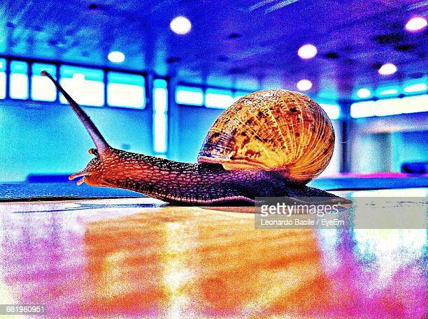 Side View Surface Level Of Snail On Floor