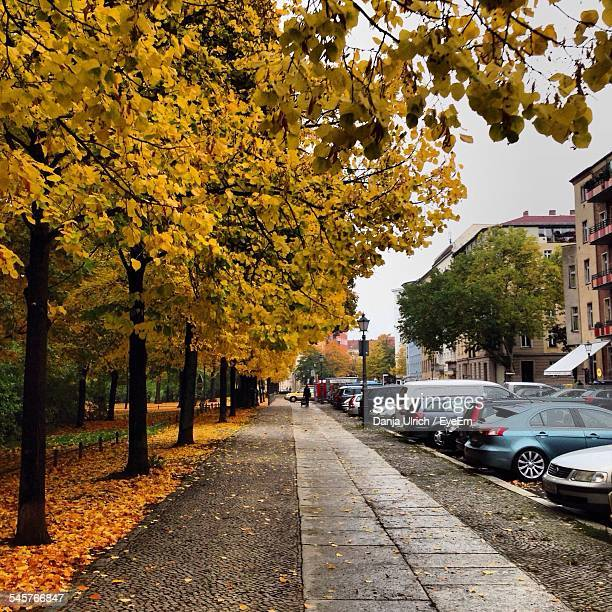 Sidewalk Amidst Cars On Street And Autumn Trees In City