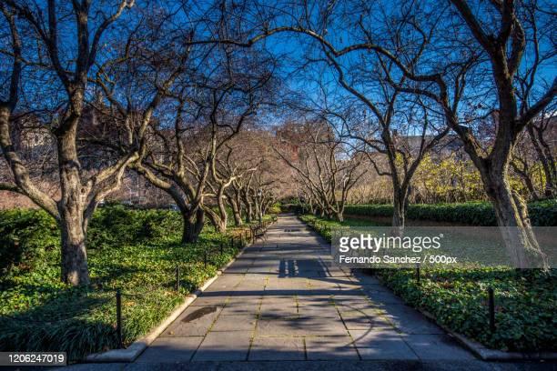 sidewalk in park in east harlem, usa - east harlem - fotografias e filmes do acervo