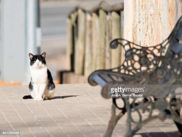 Sidewalk of a people with a bank of metallic park and to the bottom sunbathing a seated cat of white and black color