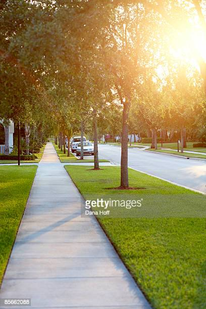 sidewalk on tree-lined street - sidewalk stock pictures, royalty-free photos & images