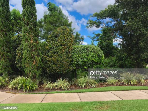 sidewalk path through manicured garden - bush stock pictures, royalty-free photos & images