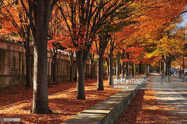 sidewalk - new jersey stock pictures, royalty-free photos & images
