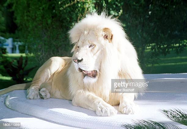 Siegfried Roy Homestory Dschungel Palast Las Vegas/Nevada/USA Garten Podest Löwe weisser Löwe PNr 383