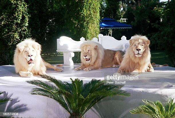Siegfried Roy weiße Löwen Tier Tiere Homestory DschungelPalast Las Vegas/Nevada/USA Palmen Podest Rasen Garten