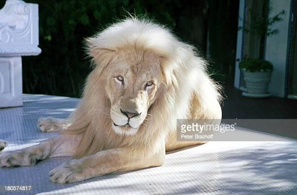 Siegfried Roy weißer Löwe Homestory 'DschungelPalast' Las Vegas/Nevada/USA Garten Podest