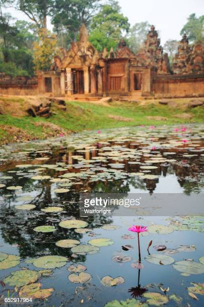 siem reap waterlily at banteay srei cambodia - banteay srei stock pictures, royalty-free photos & images