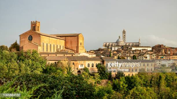 siena, tuscany, italy, europe - achim thomae stock-fotos und bilder
