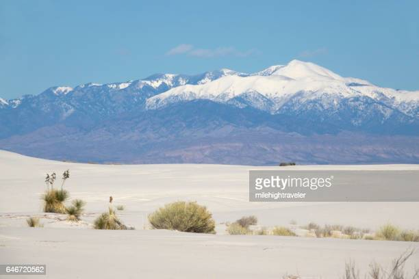 sierra blanca peak white sands national monument yucca new mexico - chihuahua desert stock pictures, royalty-free photos & images