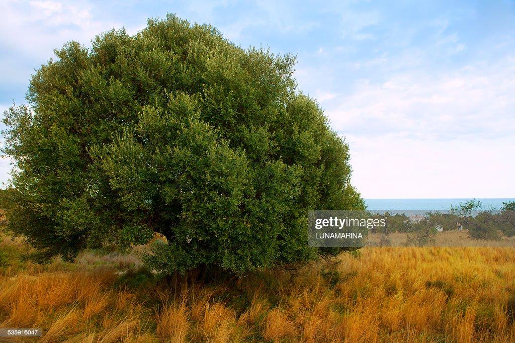 Sierra de Irta in Castellon province with sea view : Stock Photo