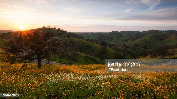 Sierra Foothills covered in Wild Flowers