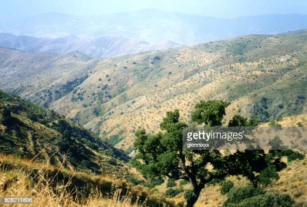 sierra nevada mountains, andalusia, spain - andalucia stock pictures, royalty-free photos & images