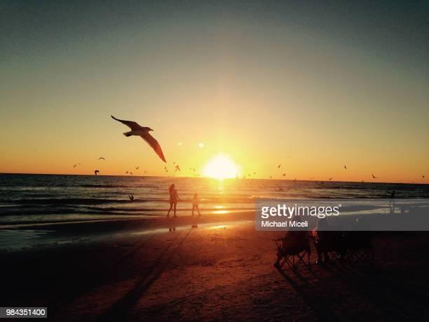 siesta key beach and a moment with an iphone - siesta key 個照片及圖片檔