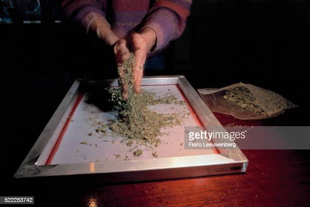 Sieving Dried Marijuana