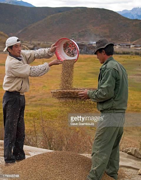 Sifting barley, Zhongdian , China
