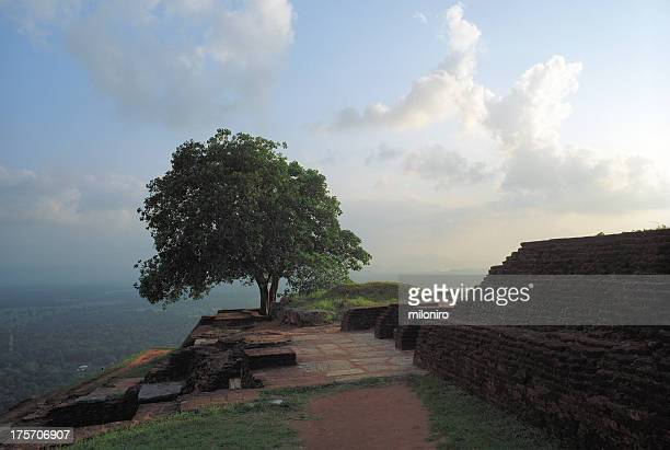 sigiriya - miloniro stock pictures, royalty-free photos & images