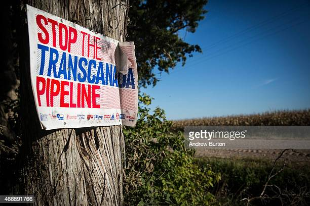 A sign against the proposed Keystone XL pipeline is posted to a tree on Shannon Graves' property on October 11 2014 in Polk Nebraska Graves a native...