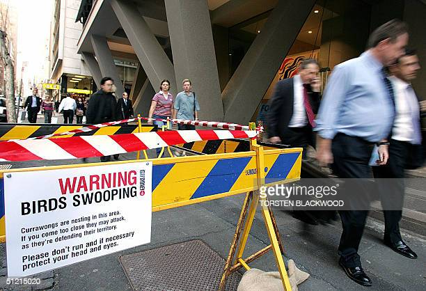 A sign and barracade erected by the city council warn pedestrians of a pair of attacking currawongs which are nesting in the centre of Sydney 25...