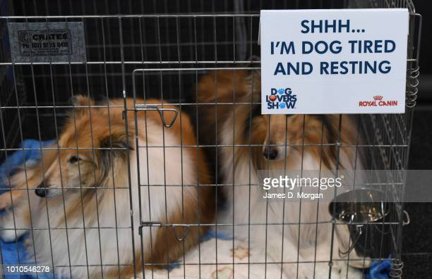 A sign asking the public to be quiet near two collies during the 2018 Sydney Dog Lovers Show on August 4 2018 in Sydney Australia The show is hosting...